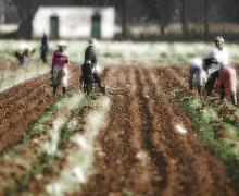 Afrique du Sud : qui donc contrôle les terres?