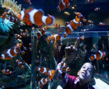 8e Congrès International des Aquariums : L'Institut océanographique signe un partenariat avec le Two Oceans Aquarium